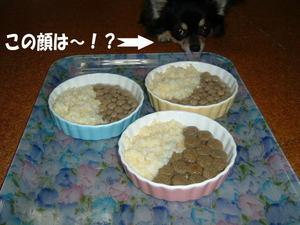 2006.01.09-1.JPG