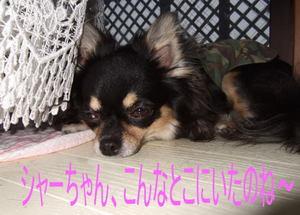 2006.09.17-11.jpg