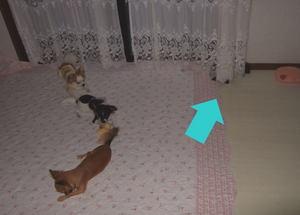 2006.09.17-7.jpg