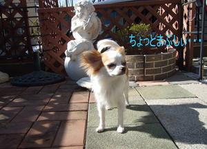 2007.03.07-2.jpg