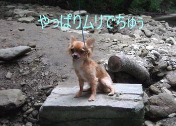 2007.08.18-9.jpg