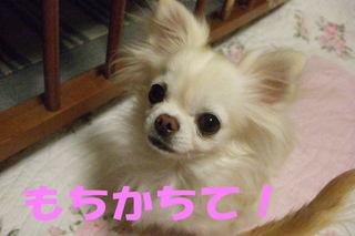 2007.12.11-2.jpg